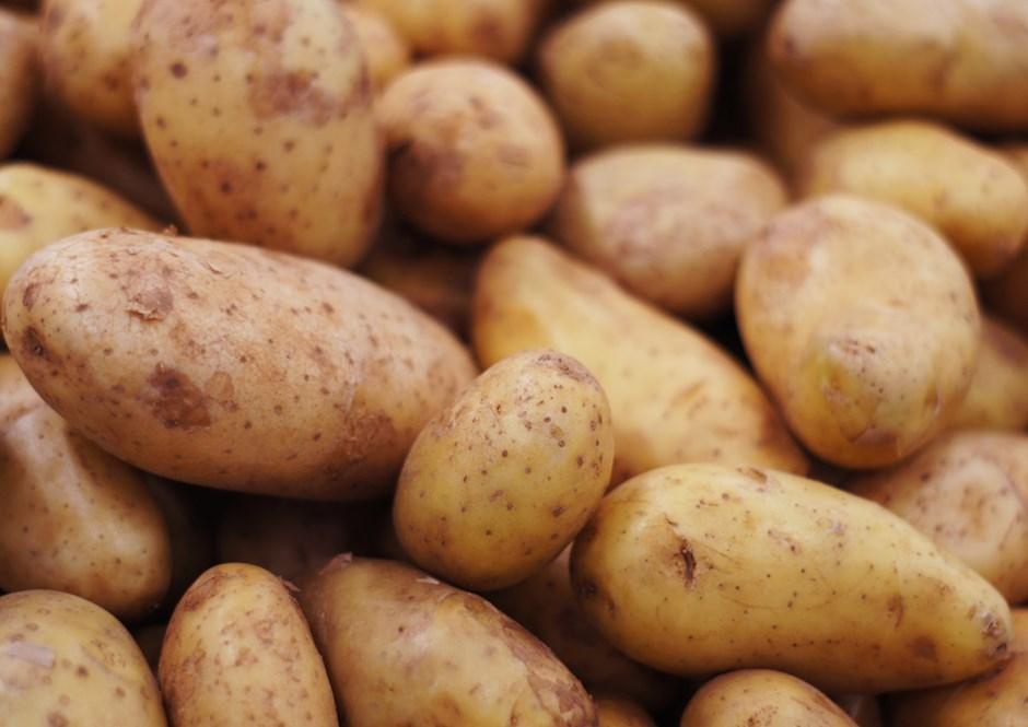 Bioengineered-Late-Blight-Resistant-Potato-to-Benefit.jpg